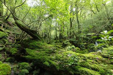 屋久島の自然