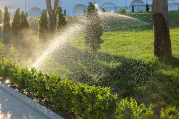 Spinkler in garden, sunset