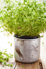 fresh thyme herb in rustic cup