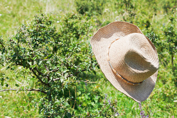 cowboy hat hangs on thorn bush