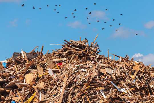 Large pile of wood on a garbage depot