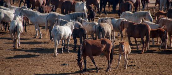 Wild Horses in Rock Springs, Wyoming