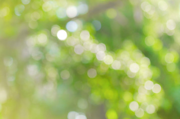 beautiful green nature bokeh abstract for background
