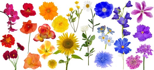 group of rainbow color flowers isolated on white