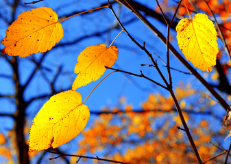 Branch with yellow leaves