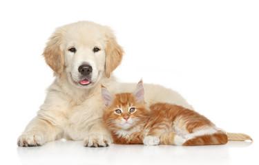 Wall Mural - Golden Retriever puppy and ginger kitten