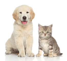 Wall Mural - Cat and dog together