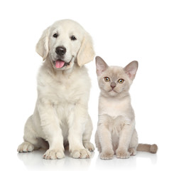 Wall Mural - Dog and Cat together