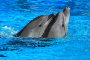 Photo sur Aluminium Dauphins two dolphins