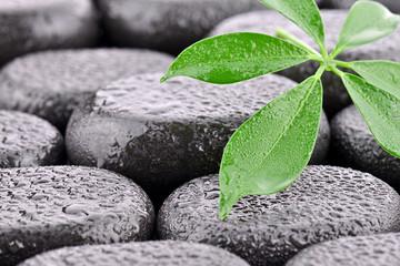 Obraz Liść z kamieniami bazaltowymi - fototapety do salonu