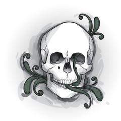 Skull Ornament. Hand drawn