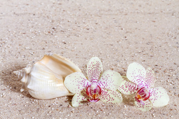 Orchid  in the sand