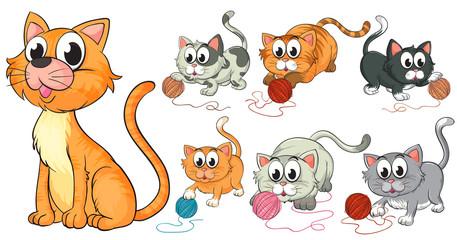 Aluminium Prints Cats Cats and kittens