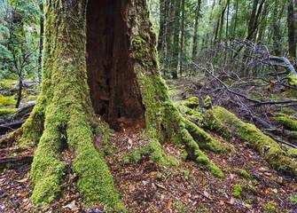 Tasmania rainforest franklin