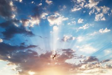 Beautiful cloudscape and flying bird, sunrise shot