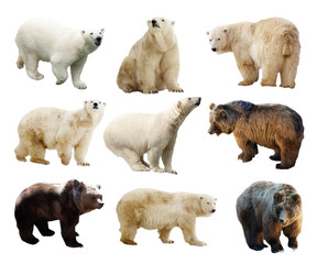 Wall Mural - Set of bears. Isolated over white