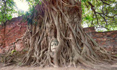 Travel to Thailand, Ayutthaya. Old tree Buddha stone sculpture.