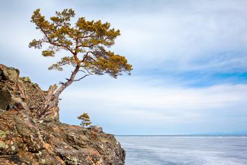 Lonely tree near Baikal lake