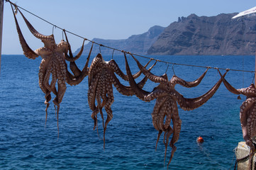 Octopuses on the rope