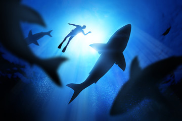 Diver And Great White Sharks Wall mural