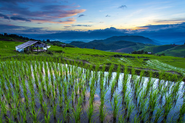 Garden Poster Rice fields Terrace rice field over the mountain,thailand