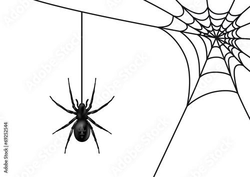 """""""spinne mit spinnennetz schwarz  vektor  isoliert"""