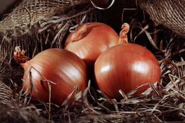 onion farm burlap