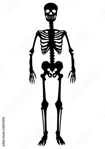 d9e1161f6aad2e Menschliches Skelett, schwarz, stehend, Vektor, freigestellt