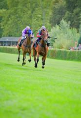 Rennpferde auf der Zielgeraden
