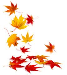 Wall Mural - bunte Herbstblätter vor weißem Hintergrund