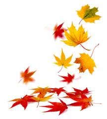 Wall Mural - buntes Herbstlaub vor weißem Hintergrund
