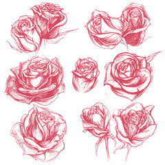 Roses Drawing set 001