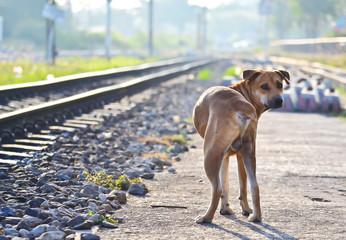 A dog in railway station