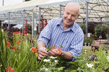 Senior man shopping in garden centre, holding red flower, smiling, portrait