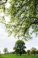 Trees in sunny field