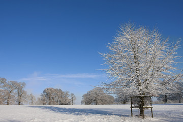 Trees and field in snow covered winter landscape