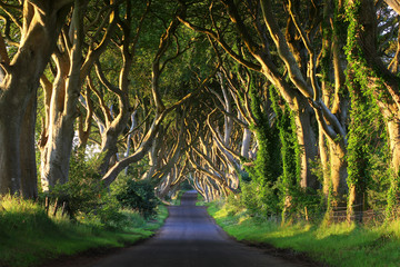 Dark Hedges VI