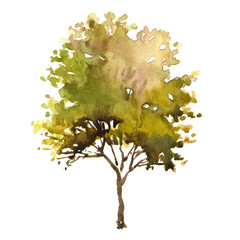 Watercolor illustration tree