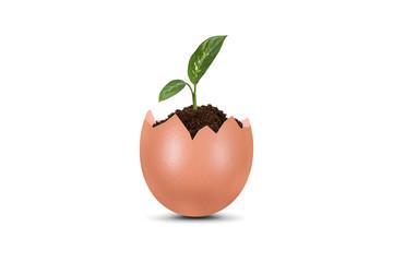 Plant Growing in Broken Egg