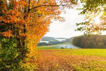 sonnige Herbstlandschaft