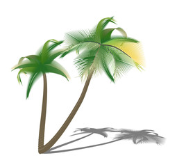 Isolated palm trees with shade.illustration