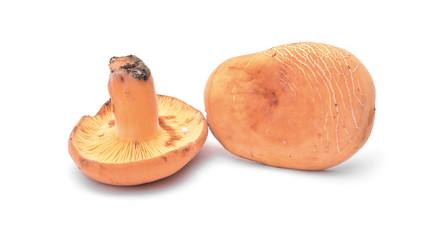 lactarius volemus
