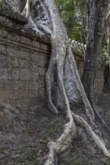 Baumwurzeln im Tempel Preah Khan in Angkor
