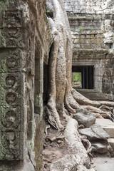 Baumwurzeln im Tempel Ta Prohm von Angkor
