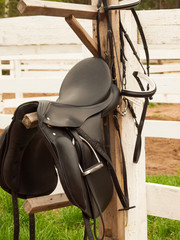 horse bridle and  dressage saddle