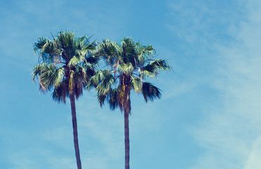 Palm trees (vintage effect)