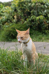 Cat sitting on the grass.
