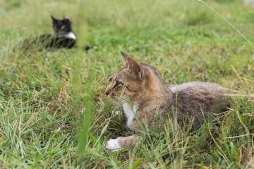 Tabby cat lying on the grass.