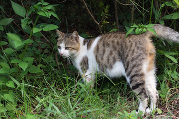 Tabby cat standing on the grassland.
