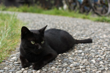 Black cat squatting on the floor.